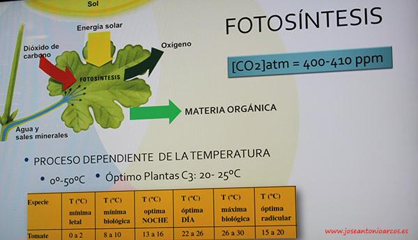 Fotosíntesis de las plantas.