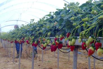 La hidroponía en el Congreso de Frutos Rojos de Huelva
