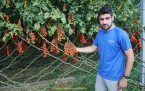 Tomate cherry rama de Naturinda.