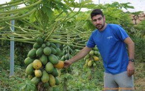 Juan López, agricultor de papaya.