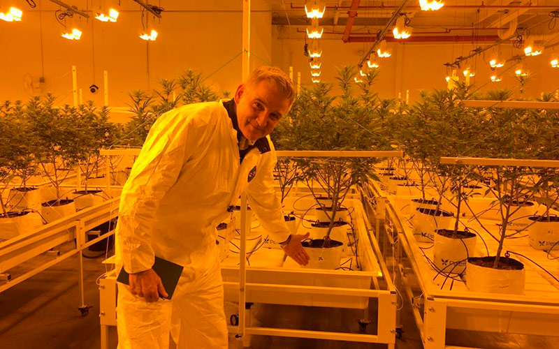 Pelemix innova con kit de cultivo para cannabis de uso medicinal