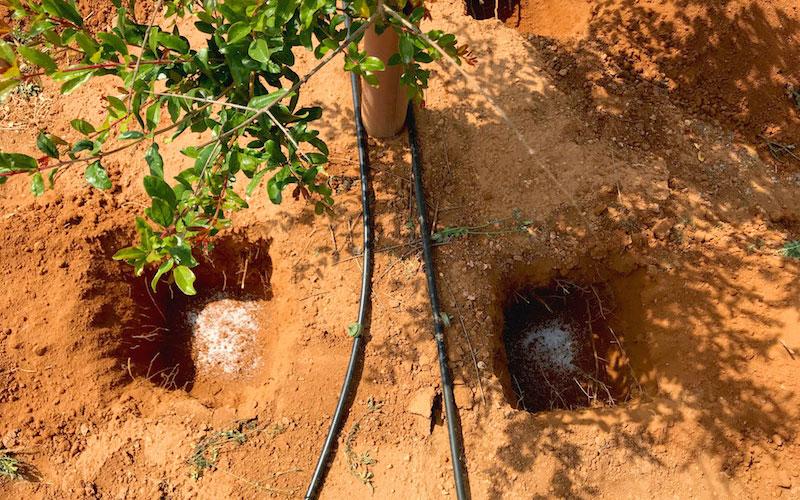 Un hidrogel de Projar reduce un 50% la frecuencia de riego