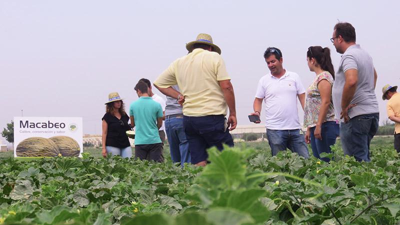 Jornada de melón piel de sapo Macabeo de Syngenta en el campo de Cartagena.