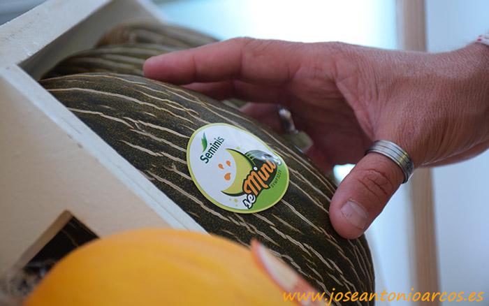 seMini, nuevo melón piel de sapo de Seminis.