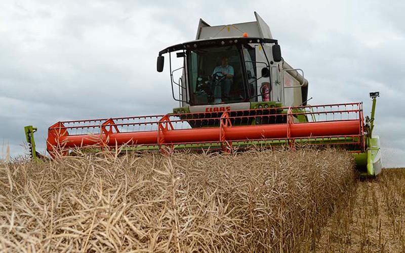 Un agricultor británico rompe el récord mundial en cultivo de colza con productos Ecoculture