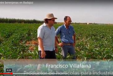 (vídeo) Entre berenjenales en la finca extremeña de Paco Villafaina
