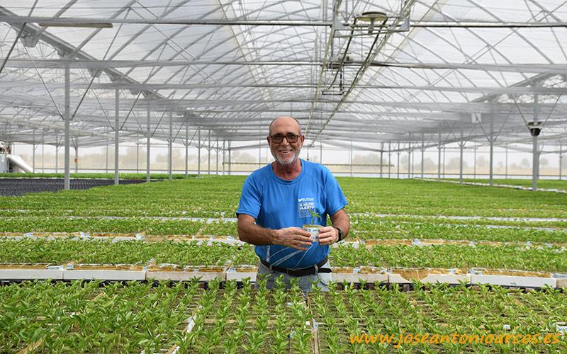 Brócoli, coliflor y pimiento en La Mancha con firma almeriense
