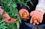 Investigadores trasladarán el Internet de las Cosas a la agricultura