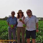 Badajoz también cultiva pimiento y berenjena para industria