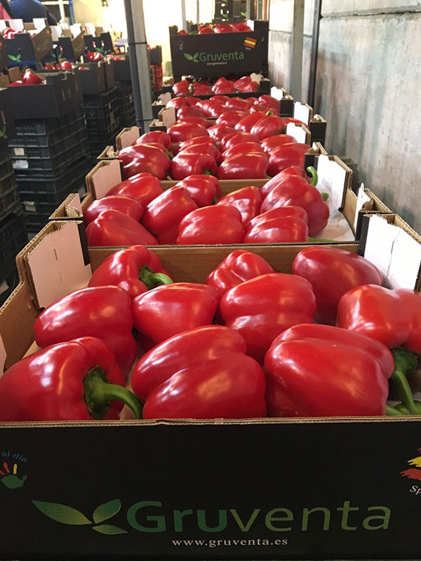 Pimiento california rojo Gruventa.