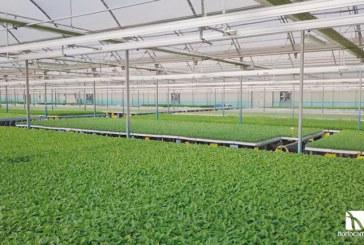 Pasión y reto por la agricultura. Así lo demuestra Hortocampo en su nuevo vídeo