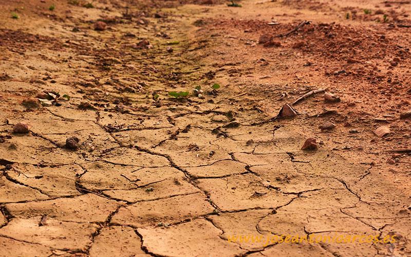 La sequía en Murcia merma la renta de 1 de cada 5 agricultores