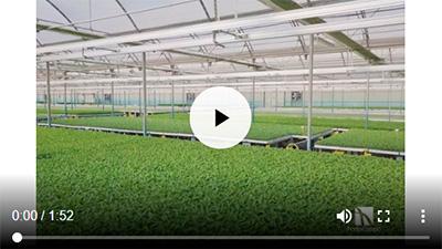 Vídeo de Hortocampo en Adra