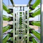 AlgaEnergy abre en Japón su primera filial en el extranjero