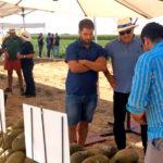 Jornada de Airen y Macabeo para cerrar la campaña en La Mancha