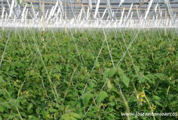 El Big Data llena de números la agricultura