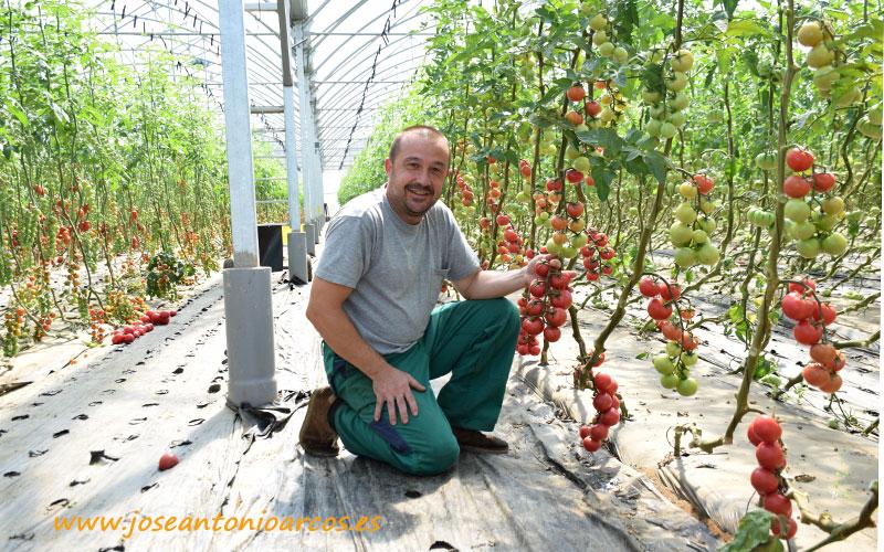 El 100% Galego de los tomates de Roberto López