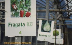 Rijk Zwaan en Galicia con Seragra y Cultiagro.