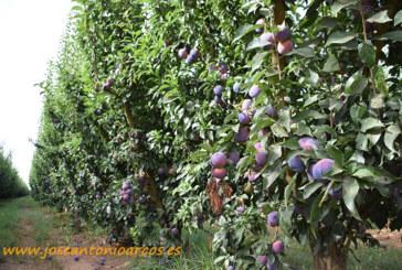 Días 4 y 5 de octubre. Xtrema Fruit, últimas novedades en fruta de hueso