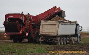 Cultivo de patatas en Serbia.