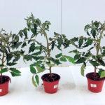 Nuevos formulados contra el estrés hídrico de los cultivos