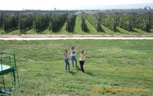 Manzanas de Ciric Agro en Serbia.