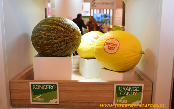 Melones de Seminis.