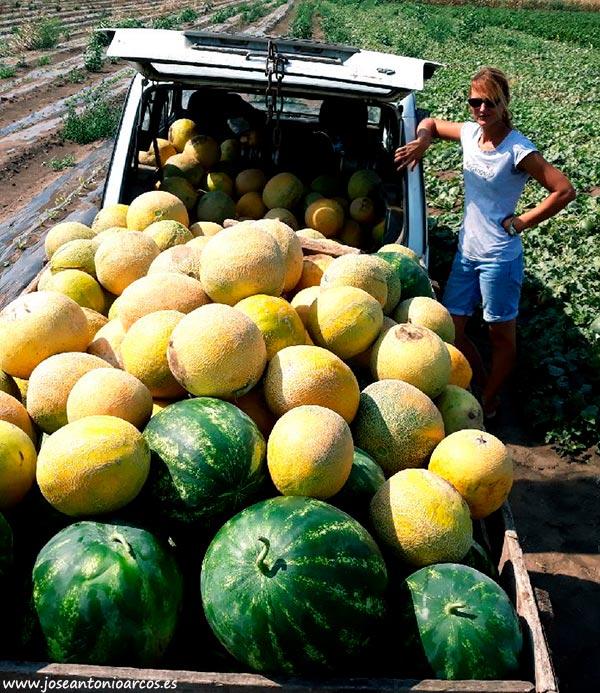 Sandías y melones en Serbia.