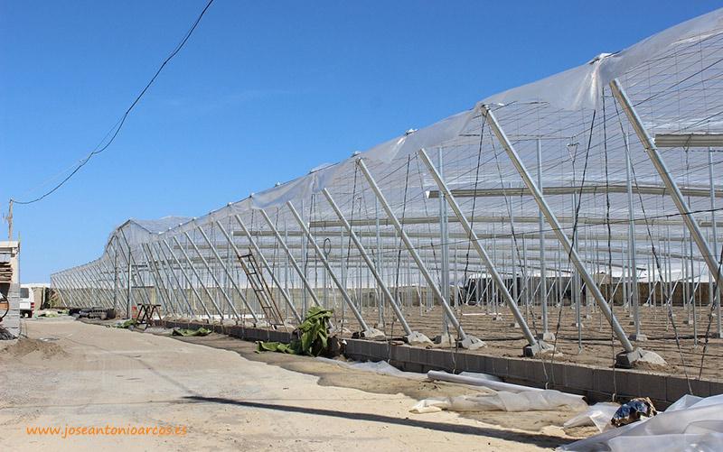Convocan nuevas ayudas para la modernización de invernaderos en Andalucía