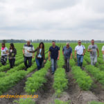 Zanahorias a orillas del Danubio