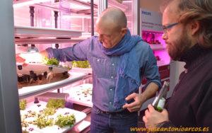 Cultivo de lechugas en el Retail Center de Berlín.