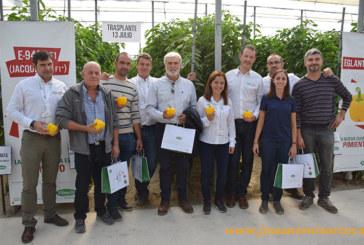 Vilmorin exhibe un jardín de pimientos con variedades para cada ciclo