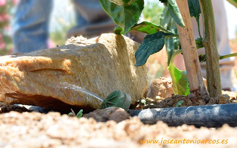 La Politécnica de Cartagena avala el uso del yeso agrícola Yescal