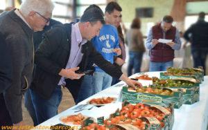 Compradores de tomate de subasta en Almería.