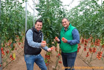 Rijk Zwaan presenta novedades en pera, rama, beef y cherry