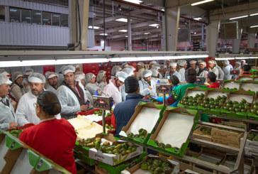 Verdita reúne a sus agricultores para compartir la excelencia del tomate Adora