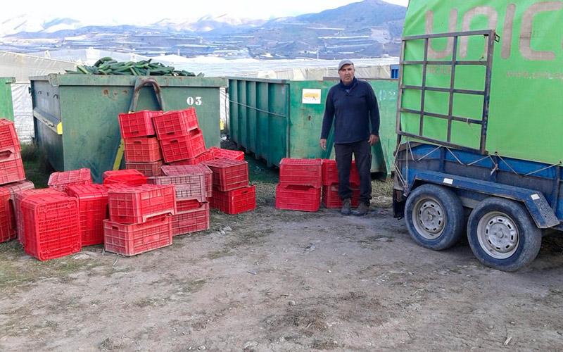 Los agricultores de Granada siguen retirando pepinos