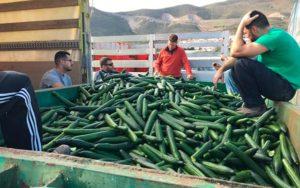 Agricultura Viva en Acción en la costa de Granada.
