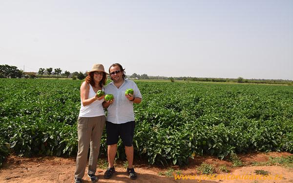 Cultivo de pimiento para industria en Extremadura.