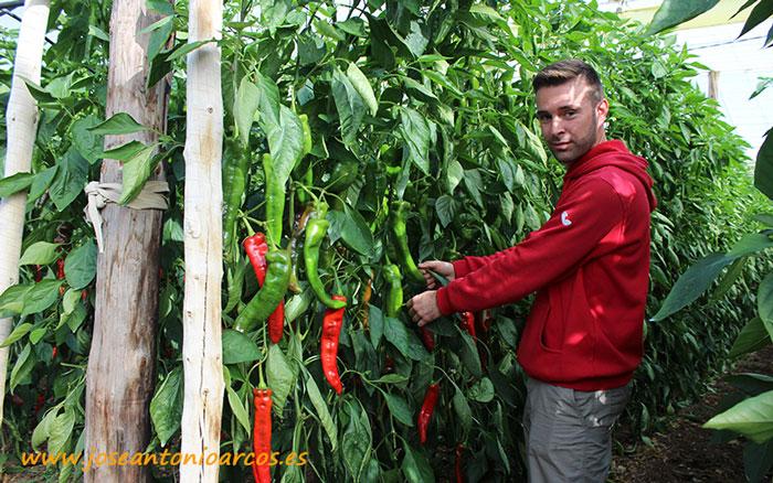 Antonio Peramo, agricultor de El Ejido.