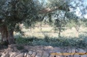 El olivar tendrá su propia cátedra