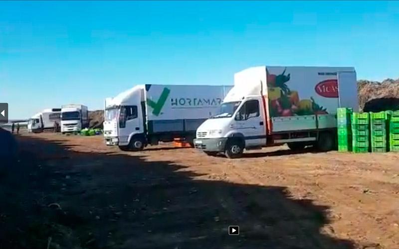 Retirada organizada de producto hoy viernes en Almería coordinada por Aproa y Coexphal.