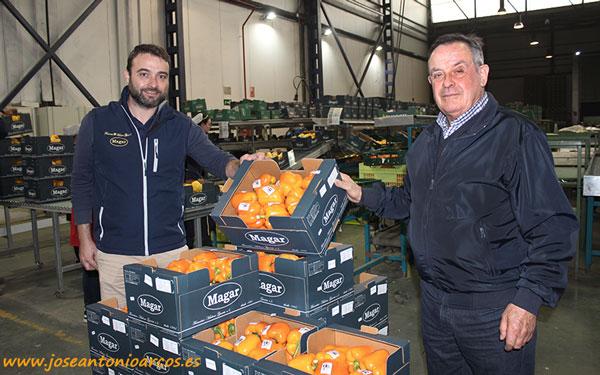 Miguel Cazorla y Francisco Maleno García con californias naranjas para EEUU.