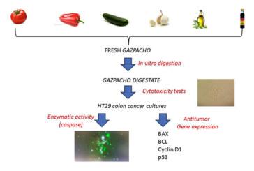 Pablo Campra descubre el poder anticancerígeno del gazpacho