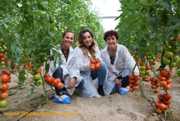 Tomates kileros en zonas frías de Níjar
