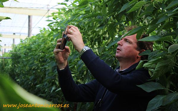 Michel de Winter, Axia Vegetable Seeds.