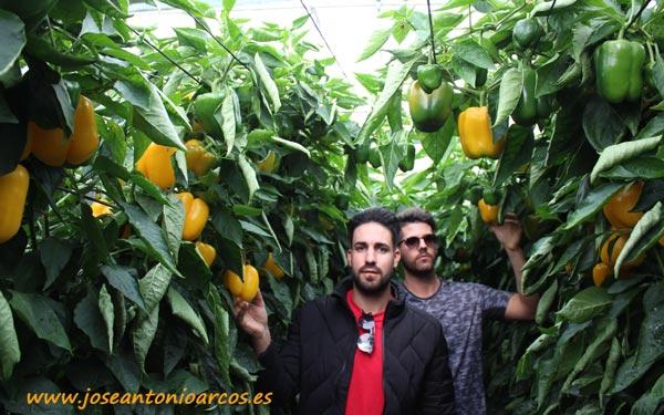 Jóvenes agricultores. Francisco Lirola y Jesús Sánchez con pimiento Morfeo.
