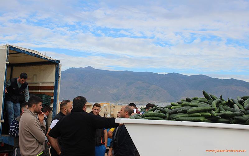Imagen de archivo (diciembre 2018). Agricultores almerienses retirando pepinos en contenedor.