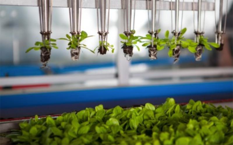 """""""Disrupt Agriculture"""" es el lema del primer Start-up Day de Fruit Logística."""