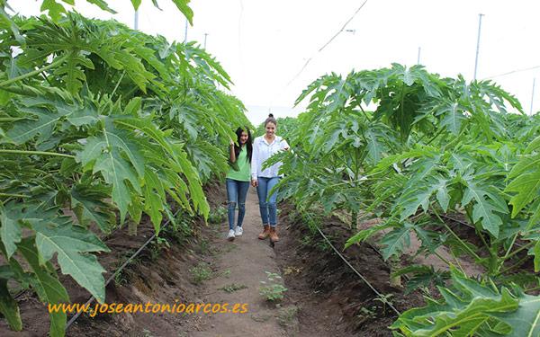 I+D de Semillas del Caribe en Colima.